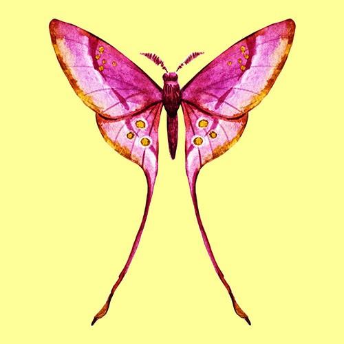 Chọn một con bướm thu hút mình nhất, đáp án sẽ giải mã nội tâm sâu thẳm trong bạn-2
