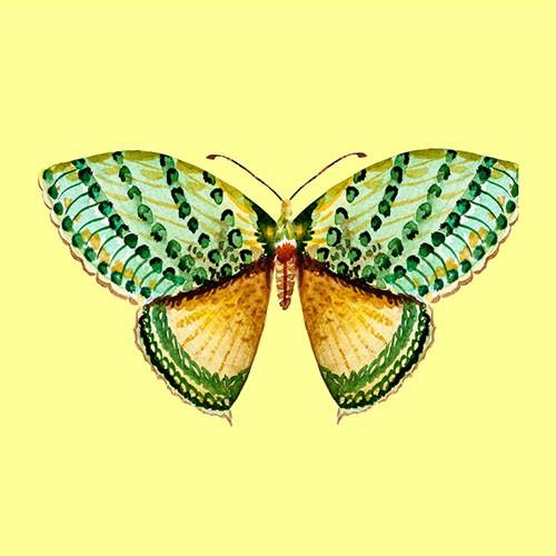 Chọn một con bướm thu hút mình nhất, đáp án sẽ giải mã nội tâm sâu thẳm trong bạn-3
