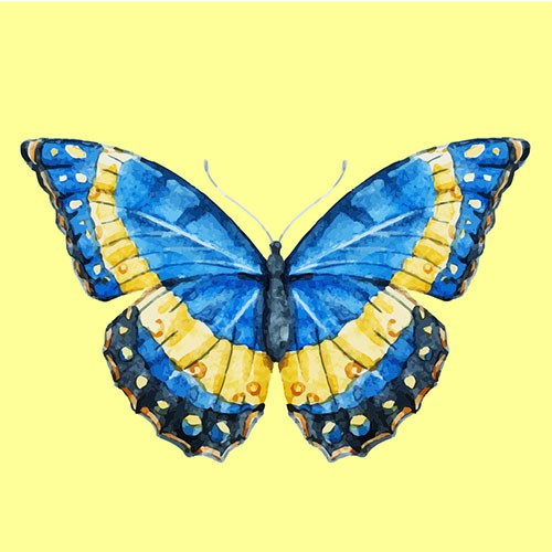 Chọn một con bướm thu hút mình nhất, đáp án sẽ giải mã nội tâm sâu thẳm trong bạn-4
