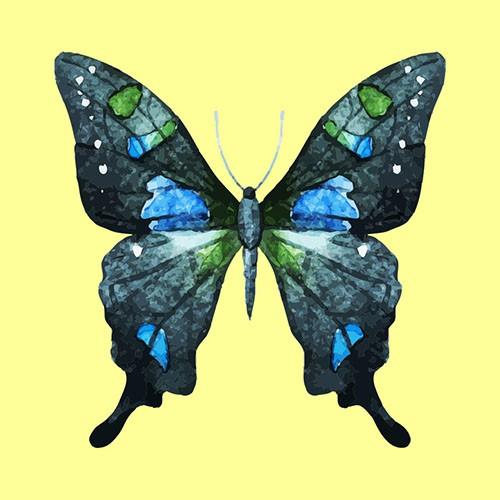 Chọn một con bướm thu hút mình nhất, đáp án sẽ giải mã nội tâm sâu thẳm trong bạn-5
