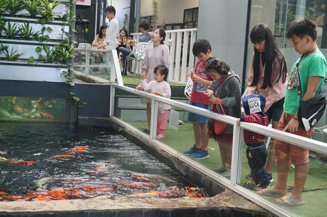 Ngắm hồ cá Koi tiền tỷ của dân chơi phố Núi-12