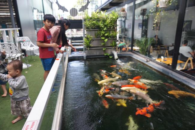 Ngắm hồ cá Koi tiền tỷ của dân chơi phố Núi-13
