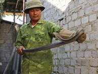 Nghe đã run tay: Nuôi đàn rắn hổ mang phì cho tiền tỷ mỗi năm