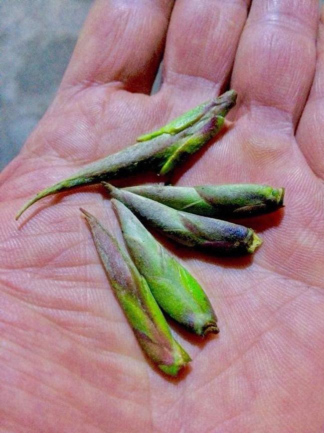 Loại trà chỉ có ở TQ, nay tìm thấy tại Việt Nam-4