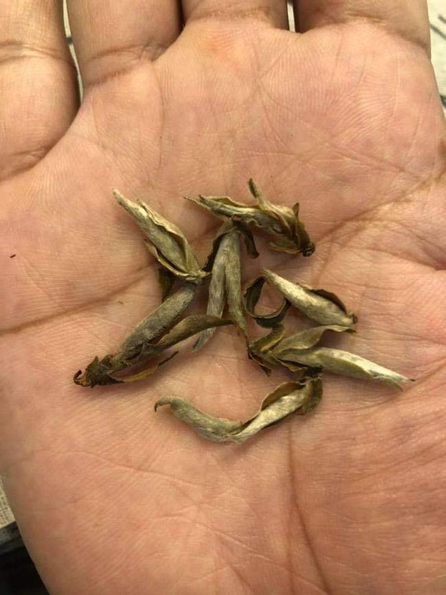 Loại trà chỉ có ở TQ, nay tìm thấy tại Việt Nam-15