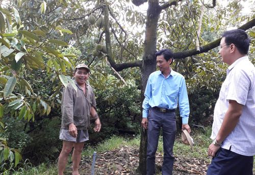 Quan xã tỷ phú nổi danh cả vùng: Cũng là nhờ trồng sầu riêng-2