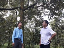 Quan xã tỷ phú nổi danh cả vùng: Cũng là nhờ trồng sầu riêng