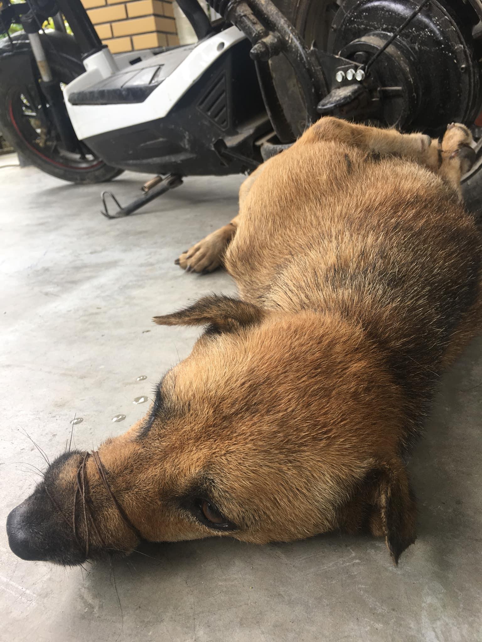 Ánh mắt buồn thiu của chú chó bị trói chân, buộc mõm trước khi bị làm thịt khiến nhiều người xót xa-2