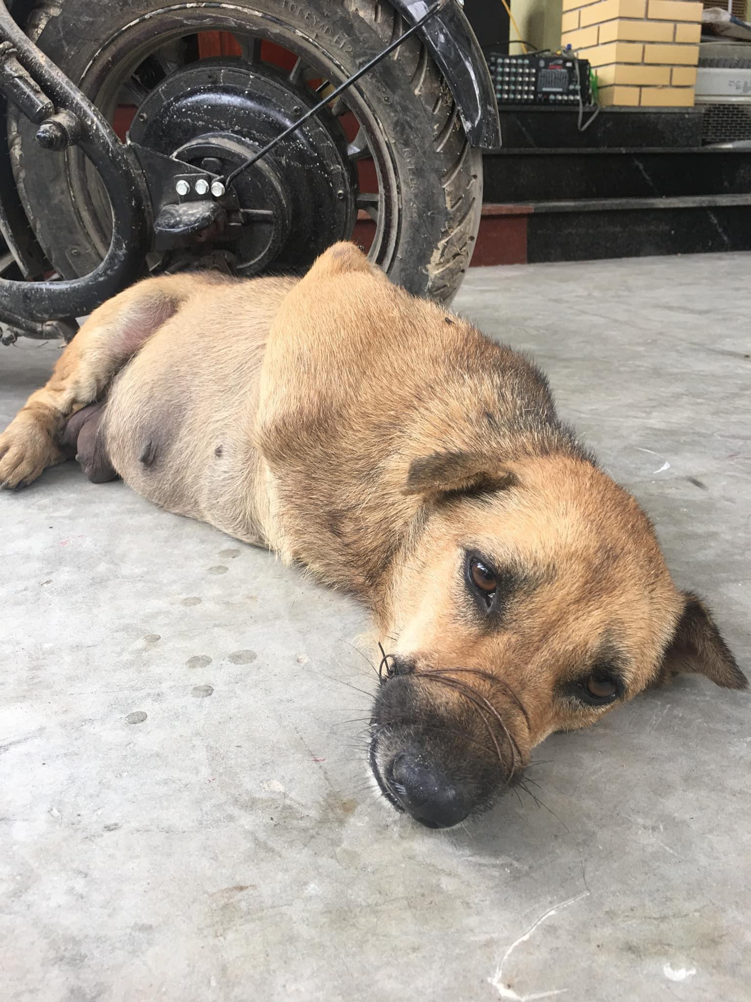Ánh mắt buồn thiu của chú chó bị trói chân, buộc mõm trước khi bị làm thịt khiến nhiều người xót xa-3