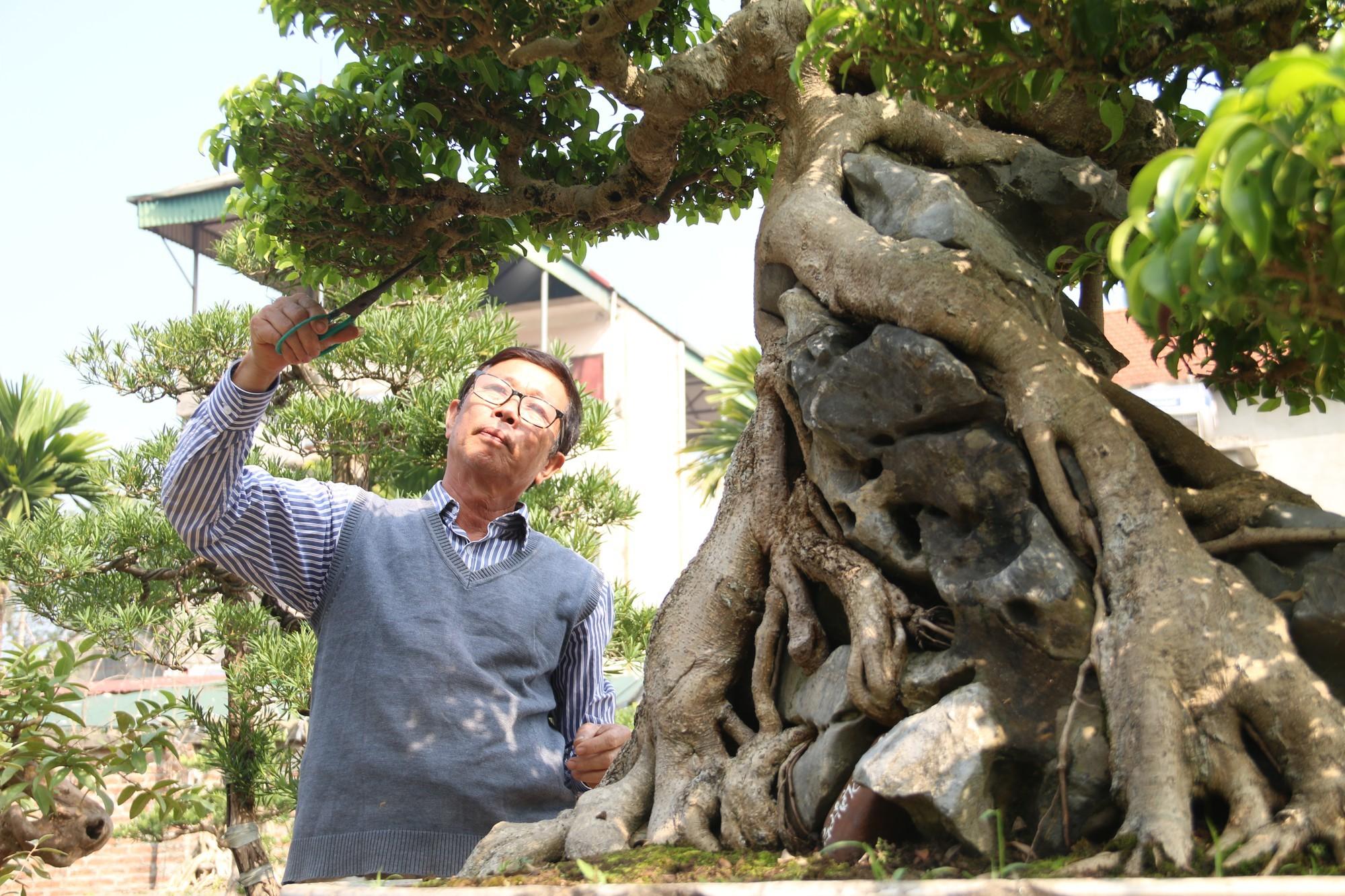 Sanh cổ dáng phượng giá triệu đô của ông vua cây cảnh Việt Nam-7