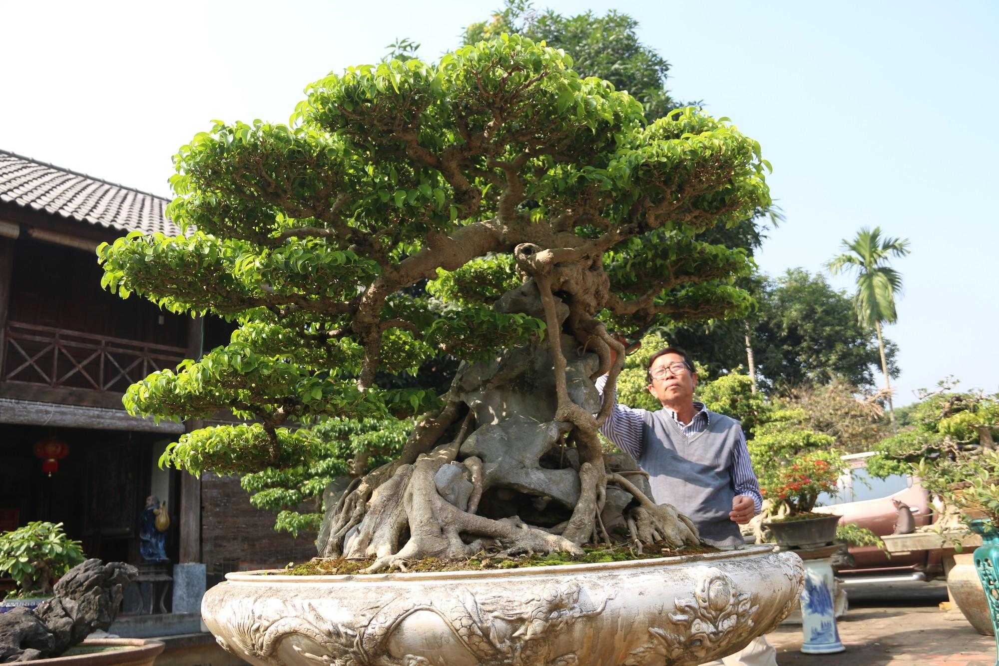 Sanh cổ dáng phượng giá triệu đô của ông vua cây cảnh Việt Nam-9