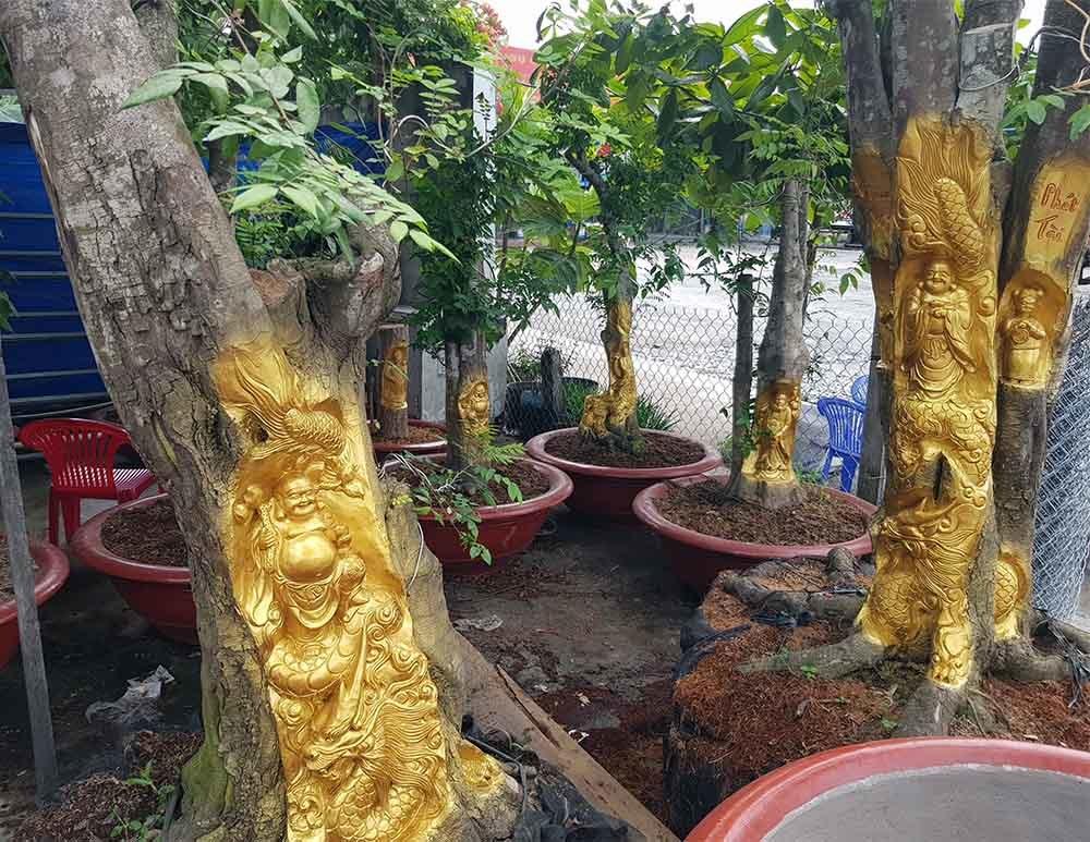 Chuyện lạ miền Tây: Quan Âm Bồ Tát cưỡi rồng vàng hiện hình trên cây khế-15