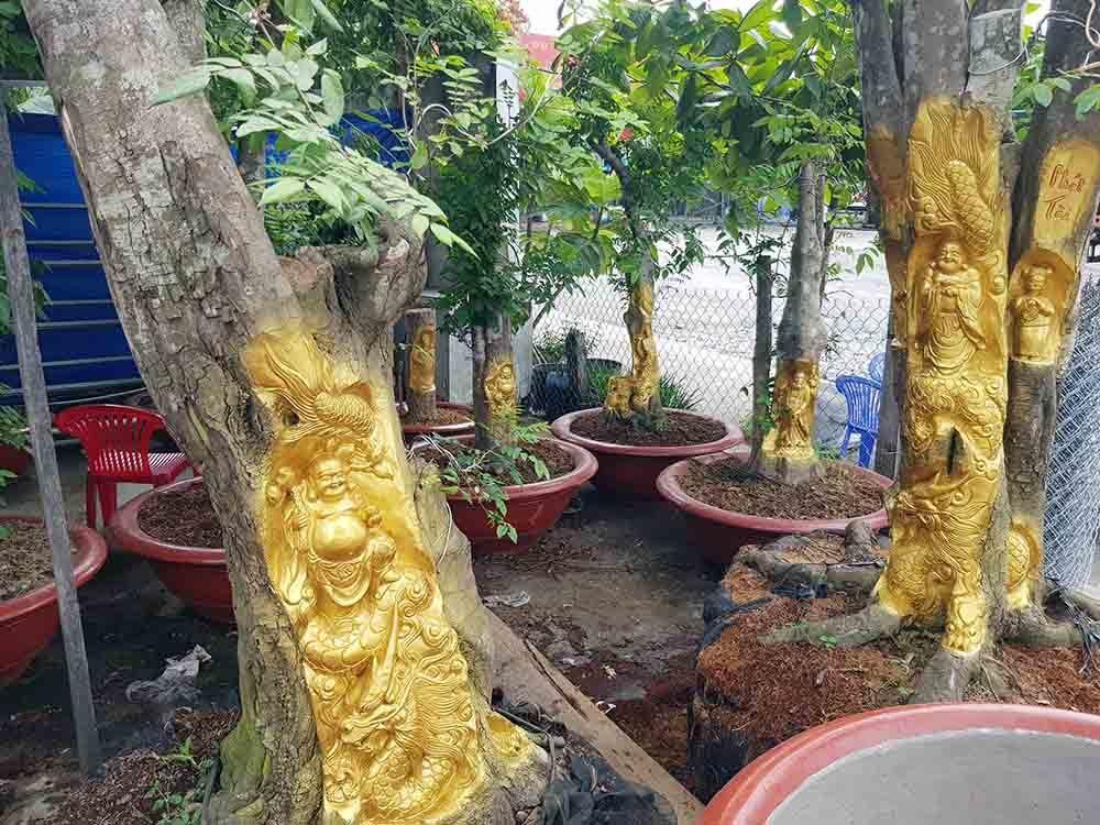 Chuyện lạ miền Tây: Quan Âm Bồ Tát cưỡi rồng vàng hiện hình trên cây khế-6