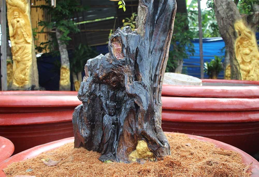 Chuyện lạ miền Tây: Quan Âm Bồ Tát cưỡi rồng vàng hiện hình trên cây khế-4