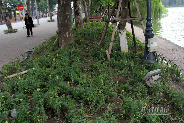 Sửng sốt vườn hoa hồ Gươm sáng nay bị san trụi sau giao thừa-13