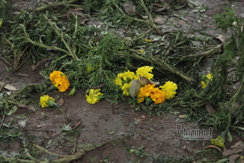 Sửng sốt vườn hoa hồ Gươm sáng nay bị san trụi sau giao thừa-14