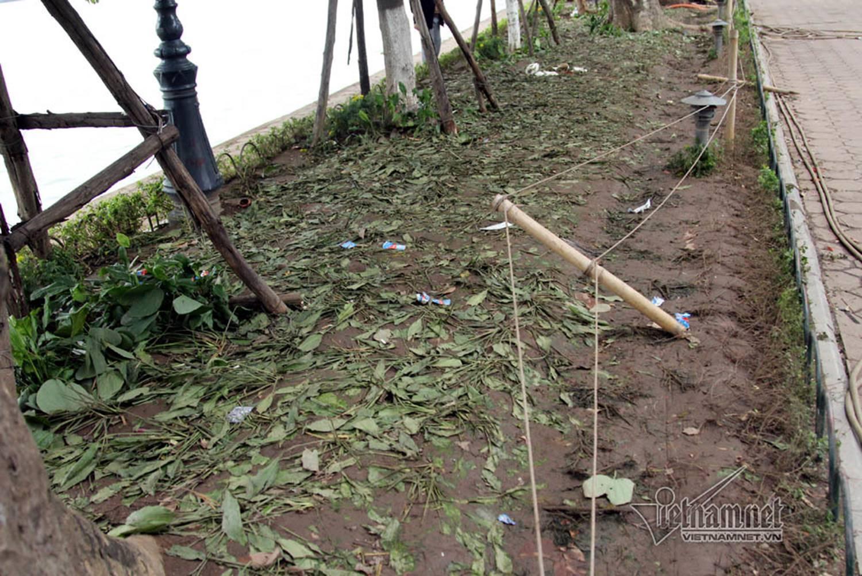 Sửng sốt vườn hoa hồ Gươm sáng nay bị san trụi sau giao thừa-17