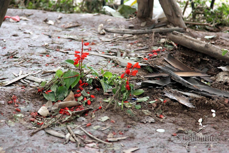 Sửng sốt vườn hoa hồ Gươm sáng nay bị san trụi sau giao thừa-21