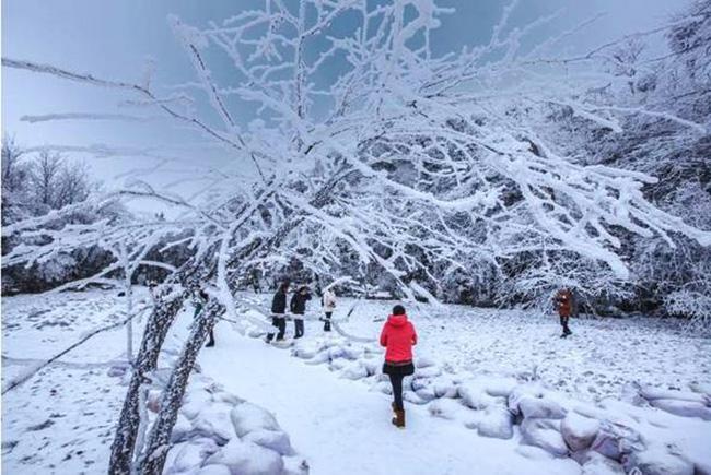 Du khách phấn khích trước cảnh tượng băng tuyết phủ trắng Trương Gia Giới-8
