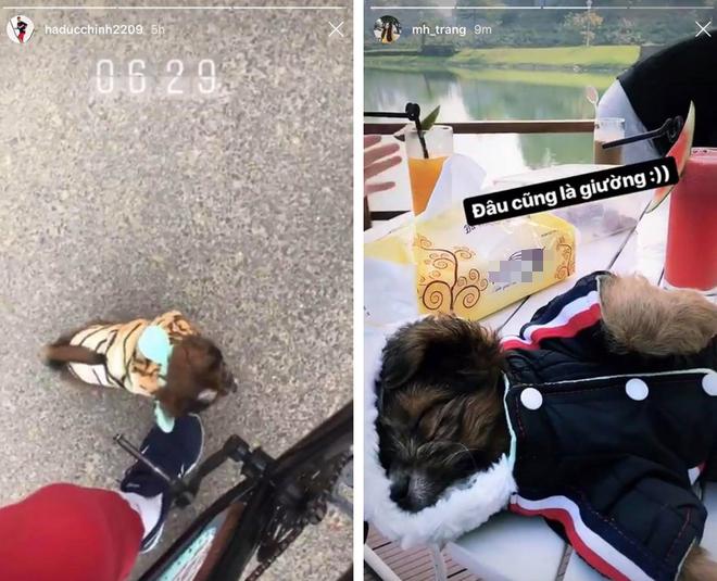 Cặp bạn thân Bùi Tiến Dũng - Hà Đức Chinh bỗng khẩu chiến trên MXH vì... một chú chó cưng-1