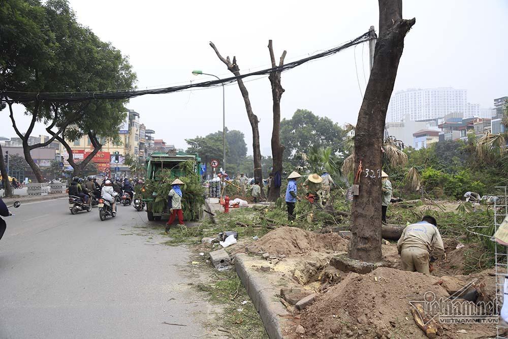 Hà Nội khai tử hàng cây đẹp nhất ven sông Tô Lịch-15