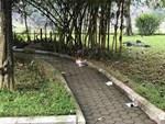 Vụ án mạng ở vườn hoa Hà Đông: Cử lực lượng công an tinh nhuệ tìm hung thủ-2