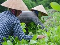 Lạ đời: Lên núi 'vạch' đá, trồng rau cải, thu tiền kìn kìn mỗi ngày
