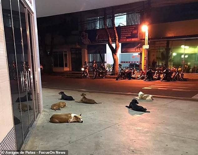 """Clip bầy chó đuổi theo xe cứu thương chở ông chủ vô gia cư"""" khiến dân mạng cảm động-1"""