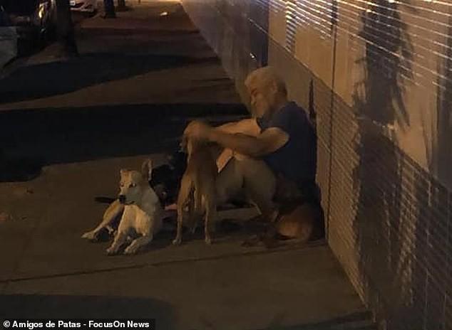 """Clip bầy chó đuổi theo xe cứu thương chở ông chủ vô gia cư"""" khiến dân mạng cảm động-2"""