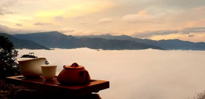 Đại lão mộc trà nghìn năm tuổi bán Tết cả chục triệu/kg vẫn cháy hàng-4