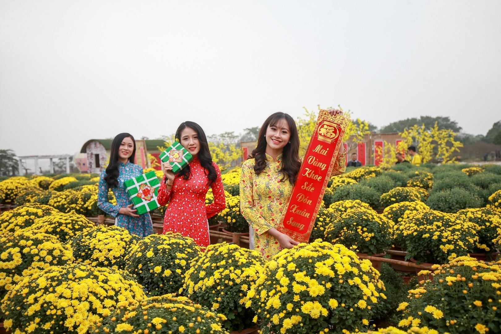 Phát sốt với vườn hoa cúc mâm xôi tuyệt đẹp ngay giữa Thủ đô-4