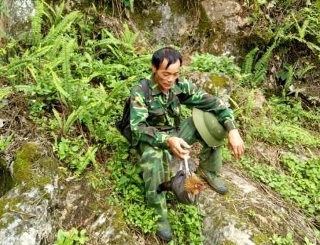 Ly kỳ chuyện trèo núi, vào thung sâu săn loài gà rừng má đỏ-3