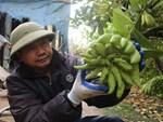 Lạ kỳ bàn tay Phật trên chậu cây mini, anh nông dân thu tiền tỷ-13