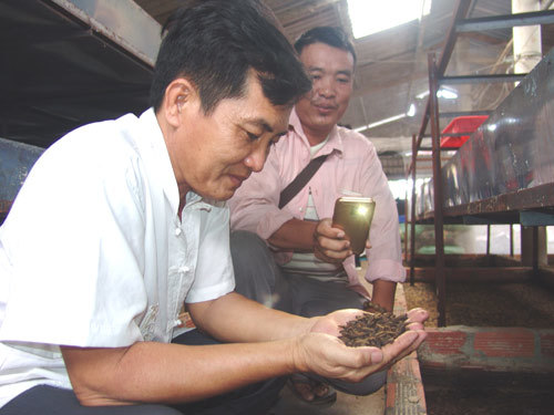 Thầy giáo bỏ nghề về quê...nuôi ruồi lấy trứng, bán 30 triệu/ký-1