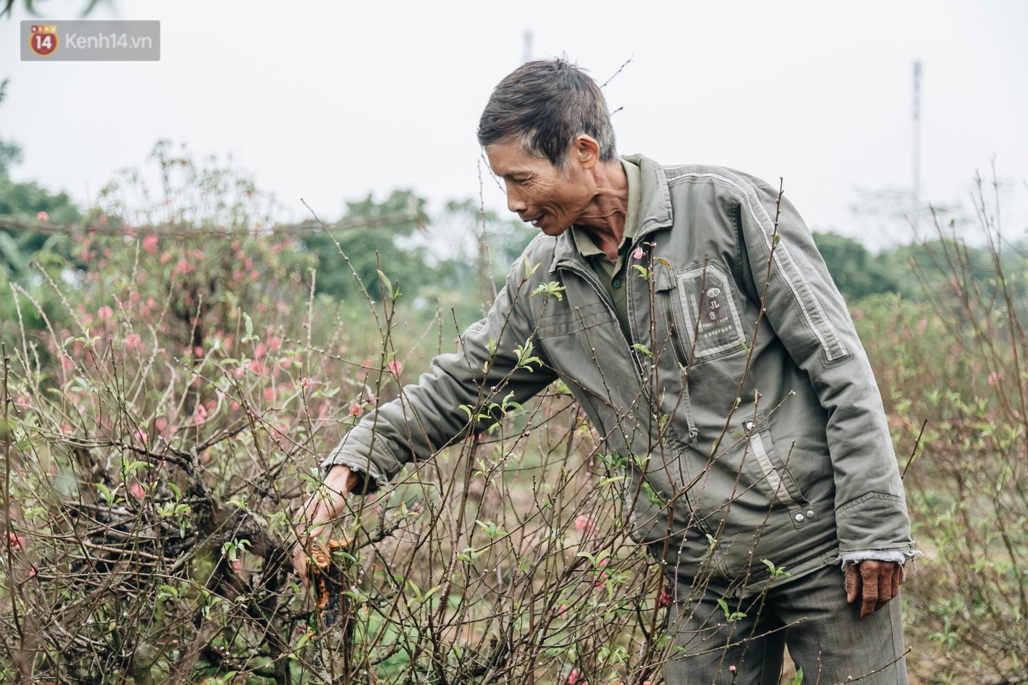 Gần 200 gốc đào của người dân Bắc Ninh bị chặt phá trong đêm: Tết năm nay còn chả có bánh chưng mà ăn-9