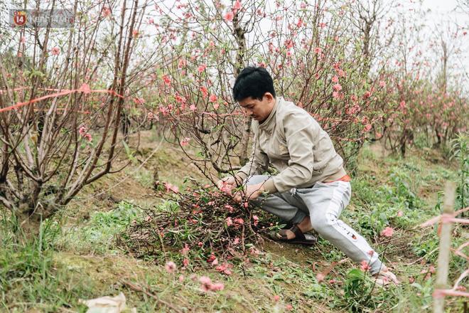Gần 200 gốc đào của người dân Bắc Ninh bị chặt phá trong đêm: Tết năm nay còn chả có bánh chưng mà ăn-15