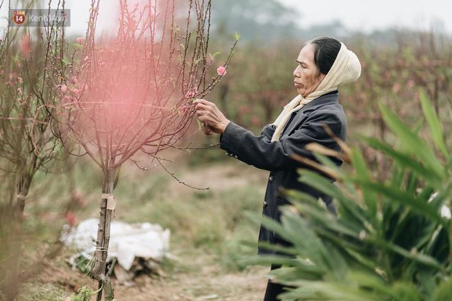 Gần 200 gốc đào của người dân Bắc Ninh bị chặt phá trong đêm: Tết năm nay còn chả có bánh chưng mà ăn-16