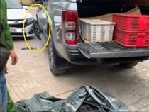 Buôn bán động vật hoang dã bị phát hiện, lái xe tông thẳng vào công an