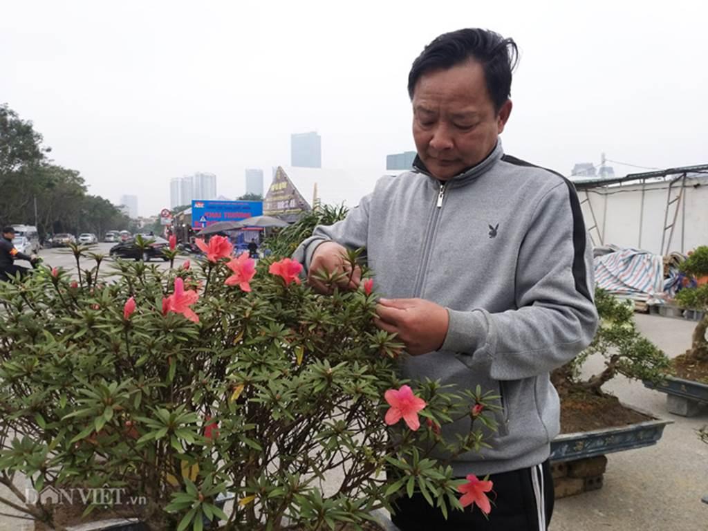 Đỗ quyên bonsai hàng độc chưng Tết giá gần tỷ trình làng Thủ đô-8