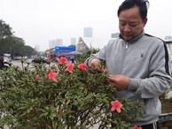 Đỗ quyên bonsai 'hàng độc' chưng Tết giá gần tỷ 'trình làng' Thủ đô