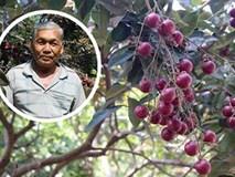 Lão nông từ chối Trung Quốc: Đặc sản phải để dân Việt ăn Tết