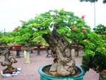 Ngắm vườn bonsai cực chất giá trăm tỷ đồng ở Bình Định-12