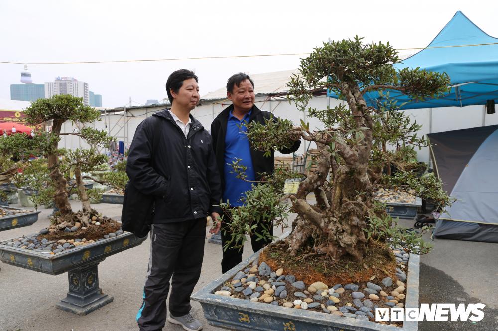 Cận cảnh cây đỗ quyên 400 năm tuổi có giá gần 1 tỷ đồng-3