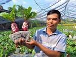 Cây bồ đề trăm tuổi độc nhất Việt Nam, đại gia đặt 2 tỷ không mua nổi-8