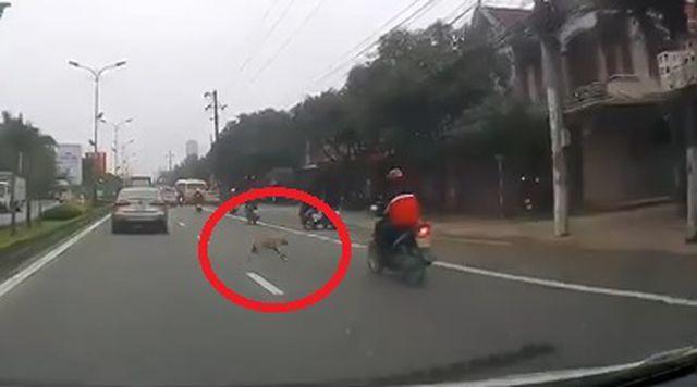 Chó thả rông khiến thanh niên đi xe máy ngã đập đầu xuống đường-1