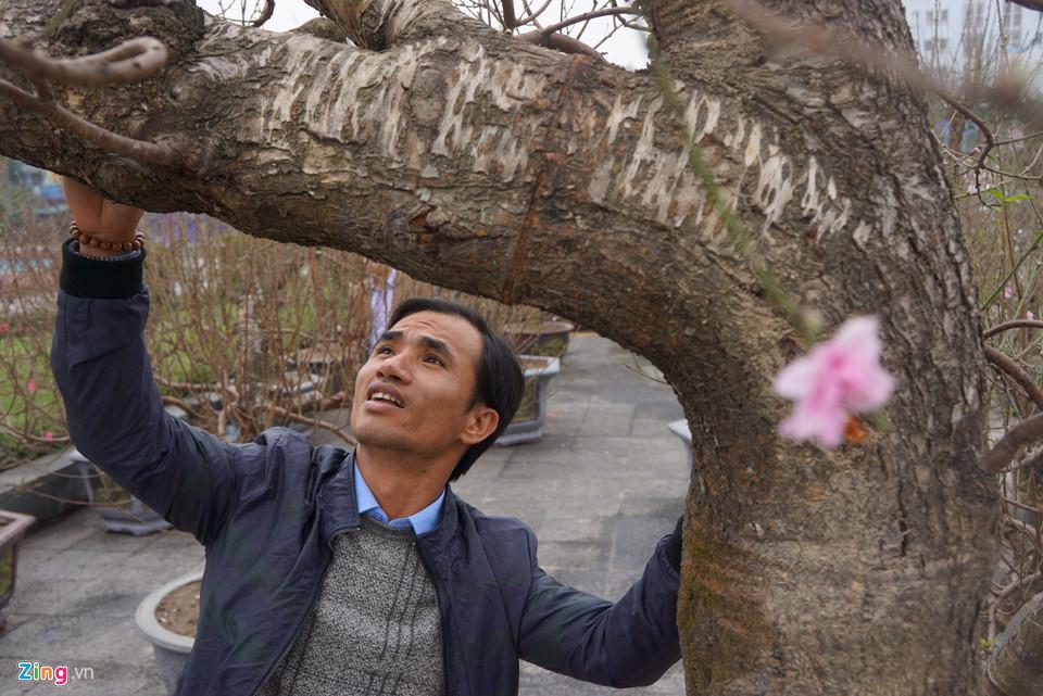 Gốc đào cổ thụ được hét giá 100 triệu ở chợ hoa Tết-6