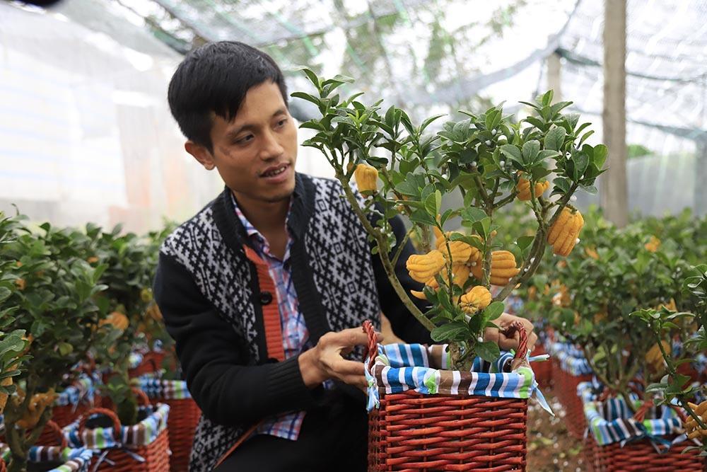 Lạ kỳ bàn tay Phật trên chậu cây mini, anh nông dân thu tiền tỷ-2
