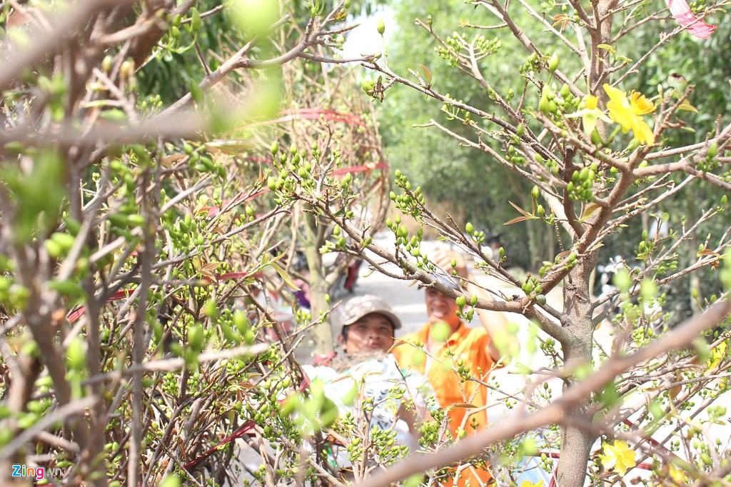 Cận Tết, thương lái đổ về làng mai mới nổi ở ngoại ô Sài Gòn-2