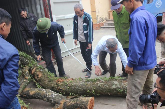 Chặt cây sưa trăm tỷ ở Hà Nội: Chẻ đôi khúc rễ, dân làng mất ngay chục tấn thóc-2