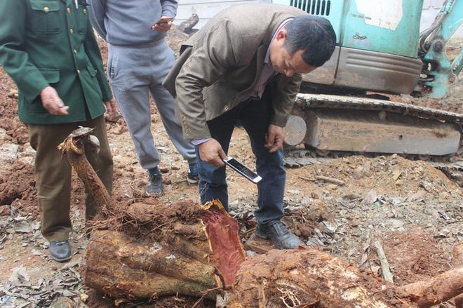 Chặt cây sưa trăm tỷ ở Hà Nội: Chẻ đôi khúc rễ, dân làng mất ngay chục tấn thóc-5